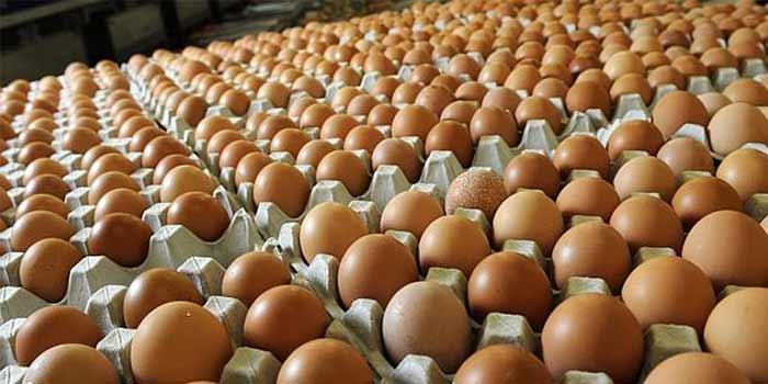 The Poultry Shop – Roadrunner chicks   Free range chickens